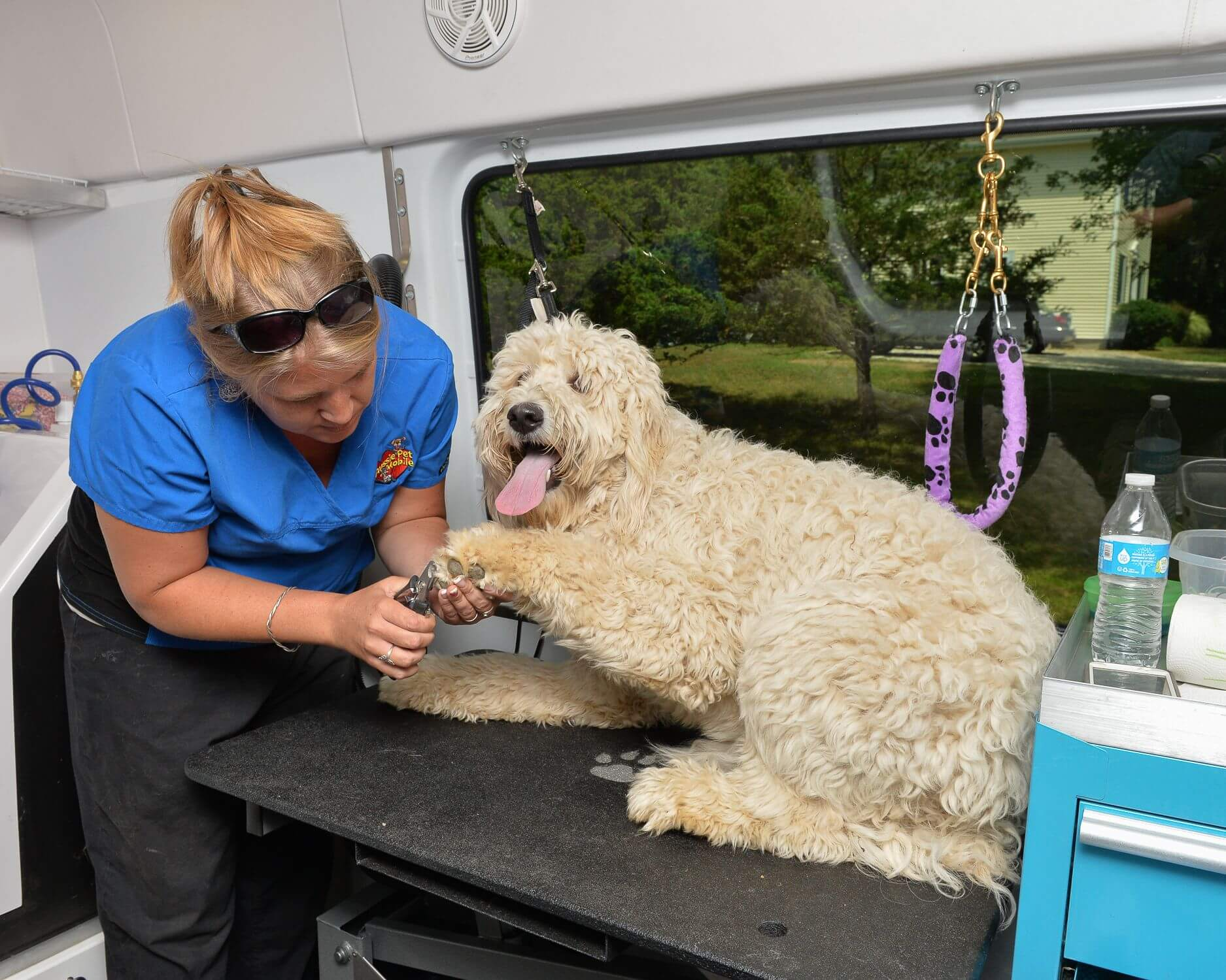 Aussie Pet Mobile   The Leader in Mobile Pet Grooming